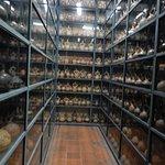 Galerias de coleção de vasinhos