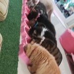 Photo of Neko Cat Cafe Phuket