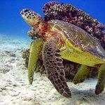 Chillin turtle