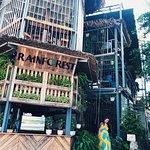 Ảnh về Rainforest