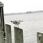 Seagull enjoying the view