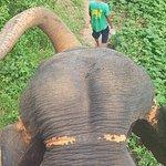 KokChang Safari Elephant Trekking Foto