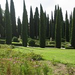 cypresses and statues