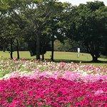ภาพถ่ายของ Uminonakamichi Seaside Park