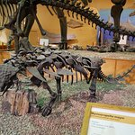 One of many complete dinosaur skeletons on display
