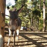 Фотография Kos Natural Park
