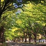 ภาพถ่ายของ Hokkaido University Sapporo Campus