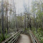 Foto Corkscrew Swamp Sanctuary