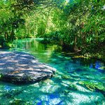 Gorgeous springs in central Florida