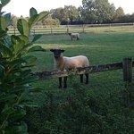 Tierischer Nachbar;-)