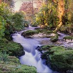 Photo of Tollymore Forest Park