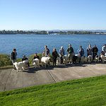 19 people owned by 19 Great Pyrenees in front of Beaches where they had a great lunch.