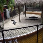 Foto de Everglades Safari Park