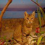 Not ennoying, little sweet kitten at Poseydon, sea and sunset on the background