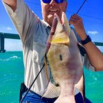 big hogfish!