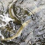 Foto di D.C. Booth Historic National Fish Hatchery