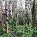ภาพถ่ายของ Paperbark Forest Walk
