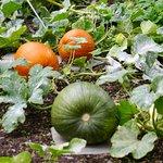 Bild från The Lingholm Kitchen & Walled Garden