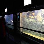 Φωτογραφία: Taraporewala Aquarium