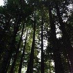 Foto van Monumento Natural de las Sequoias del Monte Cabezon,
