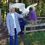 Turbary Woods Owl and Bird of Prey Sanctuary