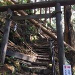 Photo of Tamaki Shrine