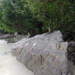 Foto de Monkey Beach
