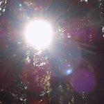 Morning sun breaks throgh the treetops.