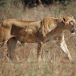 Photo of Nairobi National Park