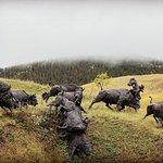 صورة فوتوغرافية لـ Tatanka: Story of the Bison