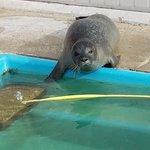 Natureland Seal Sanctuary照片