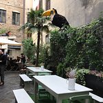Serre Torrigiani in Piazzetta Foto