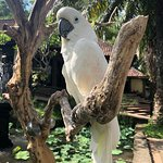 Bali Bird Park Photo