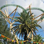 Cheetah Hunt roller-coaster...higher than the palm trees.