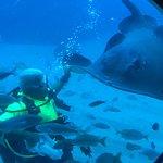 Submarine Safaris Tenerife Foto
