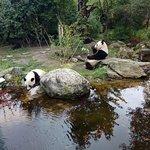 صورة فوتوغرافية لـ Tiergarten Schoenbrunn - Zoo Vienna