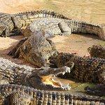 Crocoparc照片