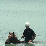 Фотография Hippo-Campus Sea Horse Ranch