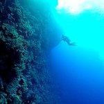 Foto di Elphinstone Reef