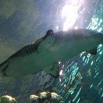 Sharks Overhead!