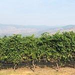 Terrafina Vineyards
