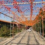 Mangshan Forest Park Courtyard
