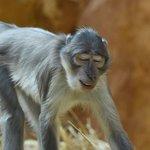 Fotografie: Zoo Landau