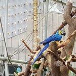 Bird from Amazon jungle, South America