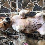 ภาพถ่ายของ มูลนิธิเพื่อสุนัขในซอย