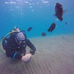 Zdjęcie Safari Diving Lanzarote