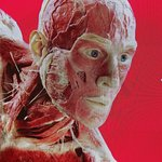 Photo de BODY WORLDS London