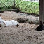 Bukit Tinggi Rabbit Farm照片