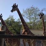 Zoo de La Fleche照片