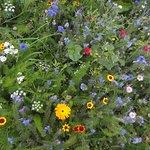 wild flower meadow along canal